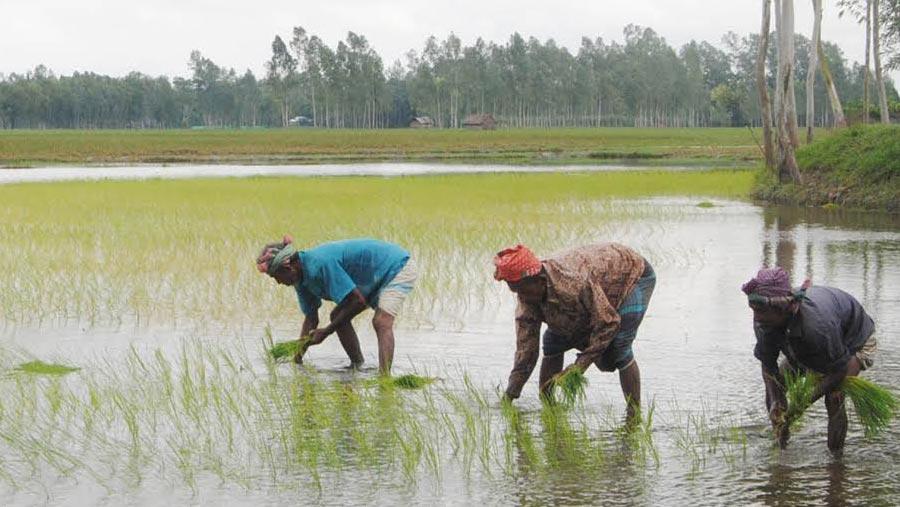 Bangladesh hits record 7.86% GDP growth