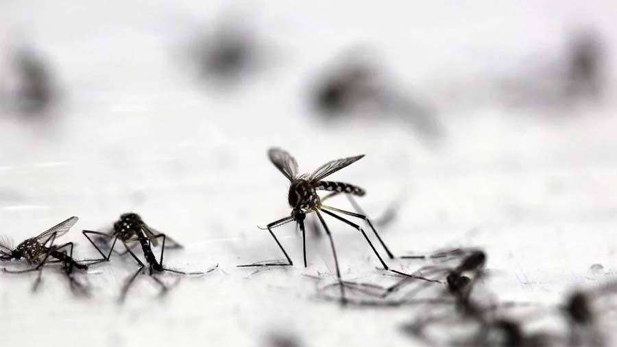 DNCC launch 'combing operation' to eliminate dengue