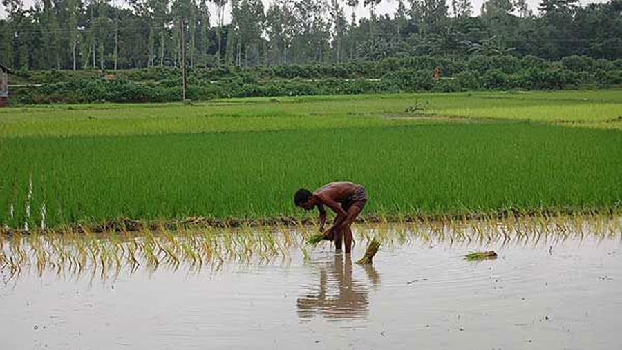 Bulbul: Agriculture sector incurs loss of Tk 263cr