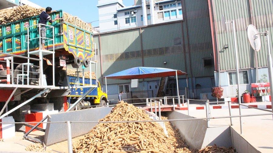 PRAN's success in cassava farming