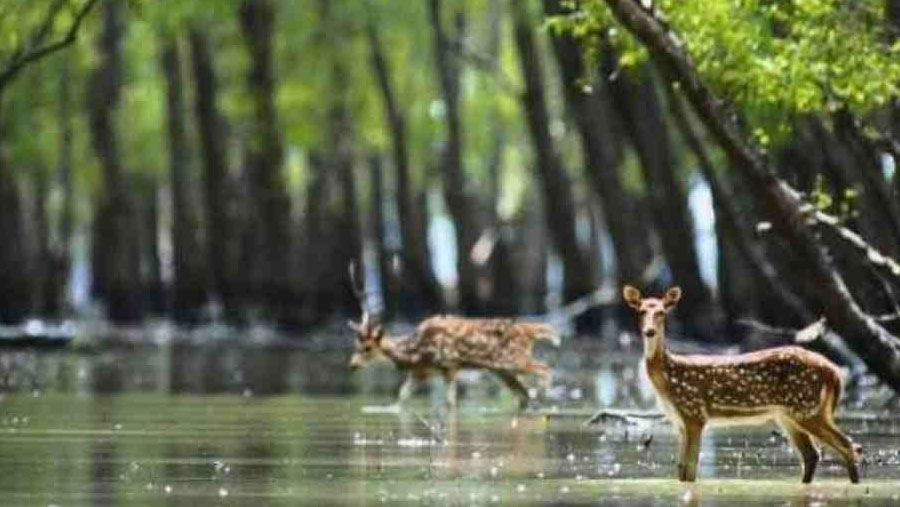 Sundarbans reopens to tourists