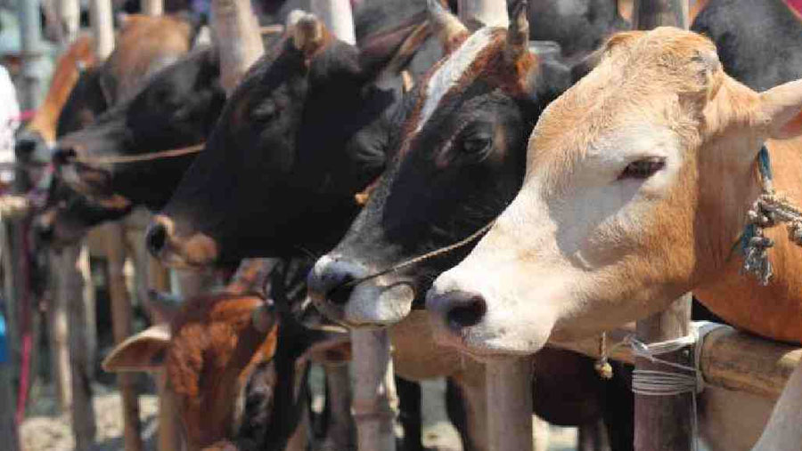 18 makeshift cattle markets to operate in city from Jul 17